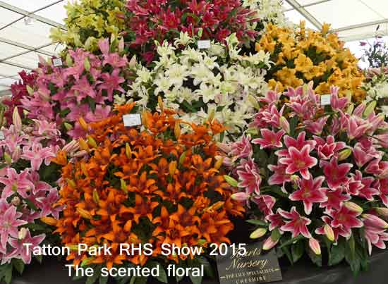 Scented floral display at Tatton Park RHS Show 2015